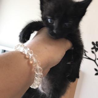 幸運を呼ぶ黒猫ちゃん