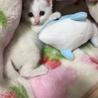人懐こい子猫(雌猫
