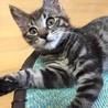 人大好き猫大好き配達のおぢさんも大好きラッキーくん サムネイル5