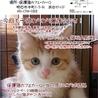 人大好き猫大好き配達のおぢさんも大好きラッキーくん サムネイル6