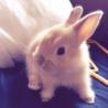生後1ヶ月の子ウサギ 2匹