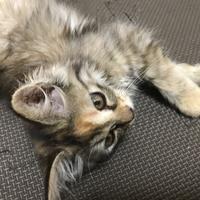 子猫ちゃん(命名中)