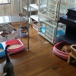 「猫部屋」サムネイル1