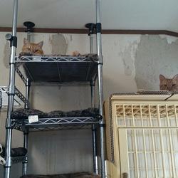 「猫部屋」サムネイル2