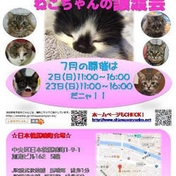 ♪しあわせにゃんこ♪猫ちゃんの譲渡会IN日本橋馬喰町