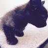 3ヶ月黒猫ながちゃん♂ サムネイル2
