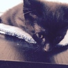 3ヶ月黒猫ながちゃん♂ サムネイル3