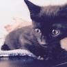 3ヶ月黒猫ながちゃん♂ サムネイル4