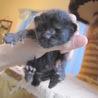 かわいい黒猫じょいなーちゃん 離乳中 サムネイル5
