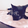 4月15日生まれ♂黒猫の男の子 サムネイル2