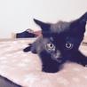 4月15日生まれ♂黒猫の男の子 サムネイル3