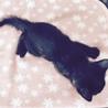 4月15日生まれ♂黒猫の男の子 サムネイル4