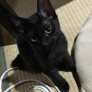 ねこ(黒猫)メス