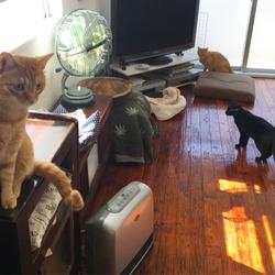 捨て猫が来たときの先住猫ら