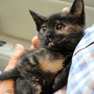 里親さん決定❗️サビ猫シャロは、クセになる⁉️