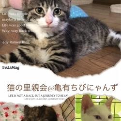 猫の里親会@亀有ちびにゃんず