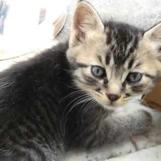 4兄妹+7匹のキジ子猫募集中!