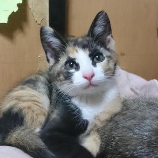 3ヶ月の三毛猫
