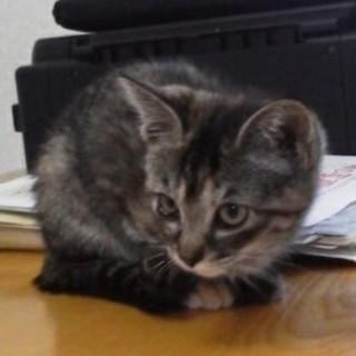 野良子猫保護してます。サビトラちゃん