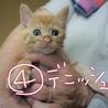 ④デニッシュちゃん