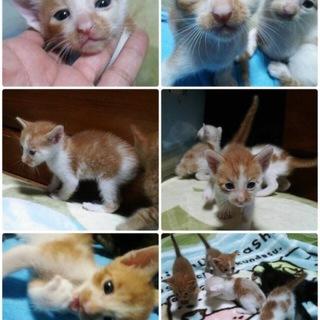 4匹産まれた猫ちゃん!