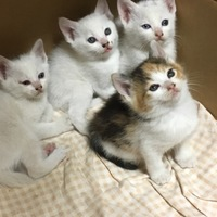 野良猫の赤ちゃん