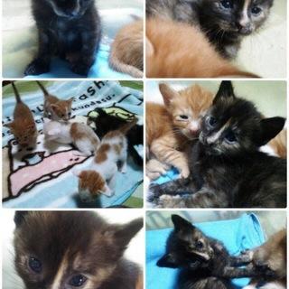 4匹兄弟猫ちゃん!