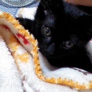やんちゃで元気な黒猫の男の子!2ヶ月☆