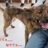 元気で賢い琉球犬mixの子犬 サムネイル7