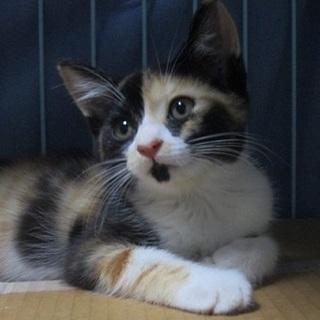 猛暑さに負けずにがんばった子猫「カリンちゃん」