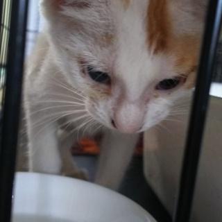 子猫、雑種 人懐っこいかわいい男の子です