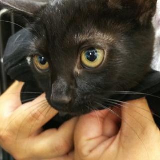 おとなしい美女子❤️黒猫❤️ドールちゃん