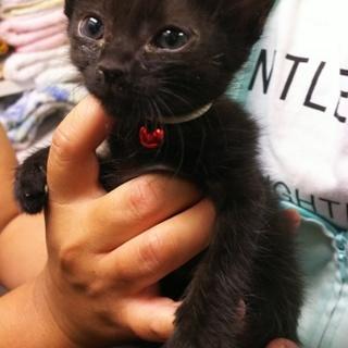 baby黒猫❤️じじちゃん❤️4姉妹