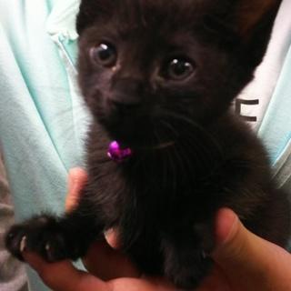 baby黒猫❤️ききちゃん❤️4姉妹