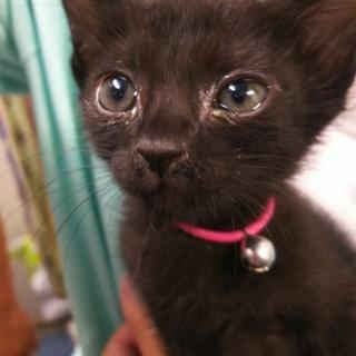 baby黒猫❤️みいちゃん❤️4姉妹