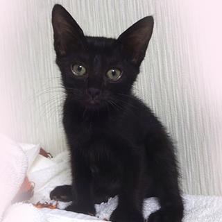 可愛い黒猫☆晴絵ちゃん 2ヵ月