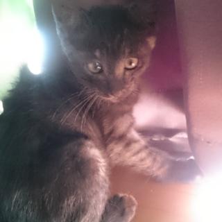 2ヶ月の子猫です