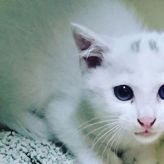 白猫マロニーくん