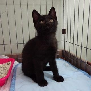 黒猫のくろたん 生後3か月