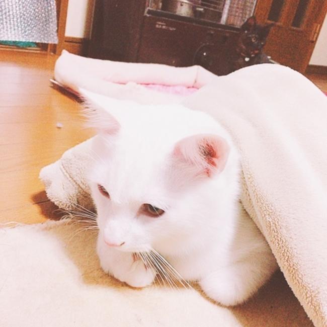 イトちゃんのカバー写真
