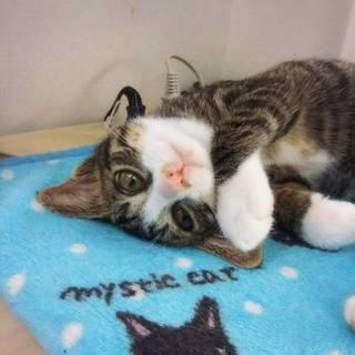 ウルトラハード甘えたさんの抱っこ子猫さん