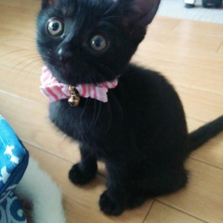 黒い子猫の家族になって下さい!