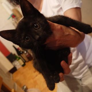 おきゃんな黒い子猫ちゃん