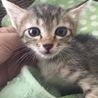 箱に入れて捨てられていた子猫たち(3)