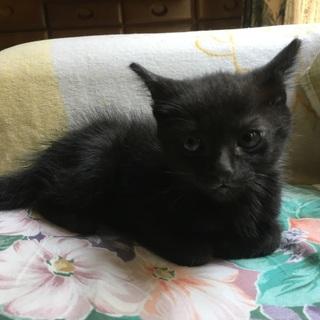 生後1か月の黒猫兄弟です