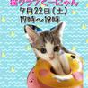 17~19時【猫の譲渡会 in 三宮・くーにゃん】
