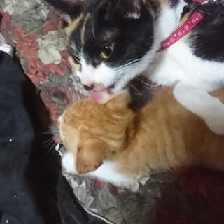 可愛いくて人懐っこい成猫