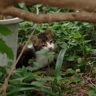 ノラ猫の赤ちゃんです