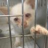 ブルーアイで真っ白な可愛い子猫ちゃん♡
