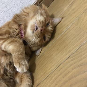 目を開けたまま寝るサッスー